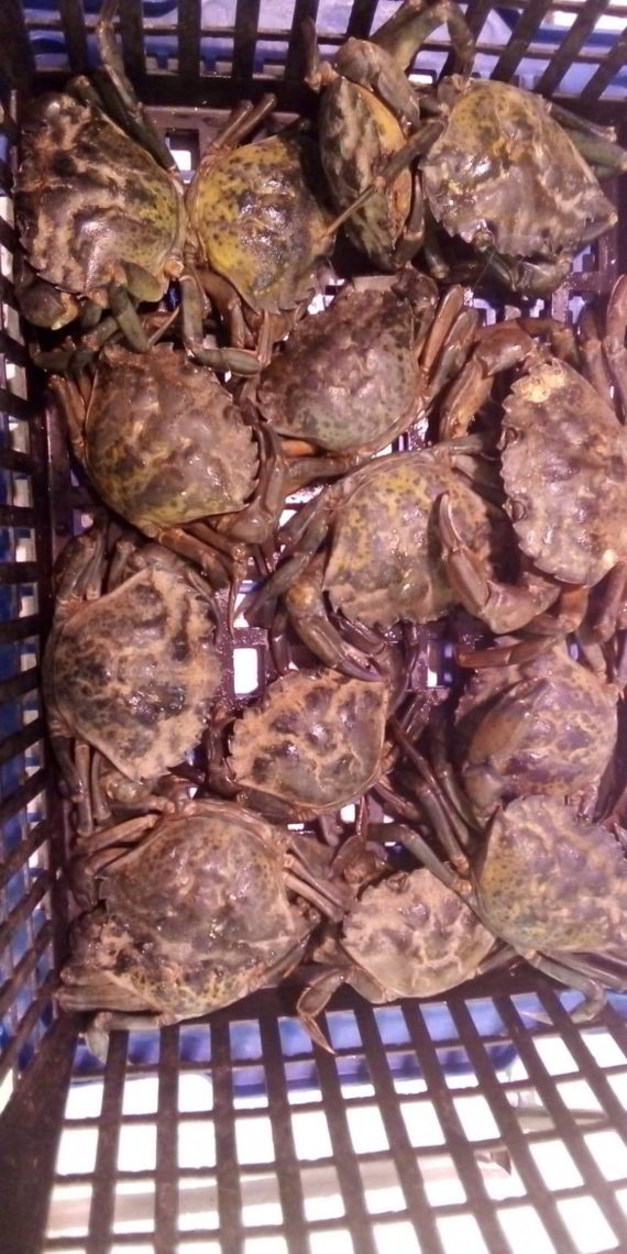 Cangrejos de mar
