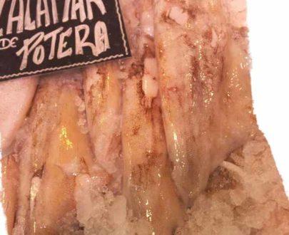 calamar de potera